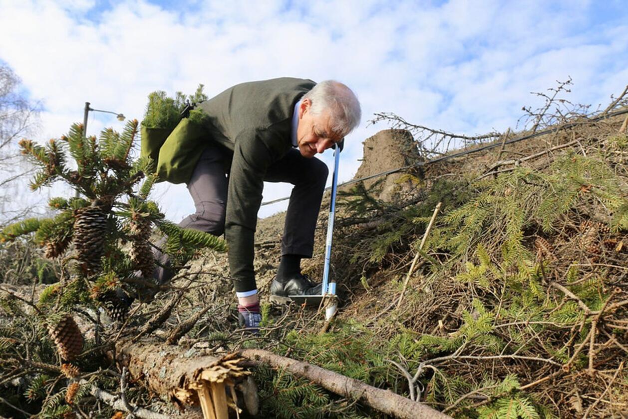 Arbeidarparti-leiar Jonas Gahr Støre var førre veke med på opplæringa av dei nye skogplantørane i Glommen Mjøsen Skog. Foto: Arbeidarpartiet