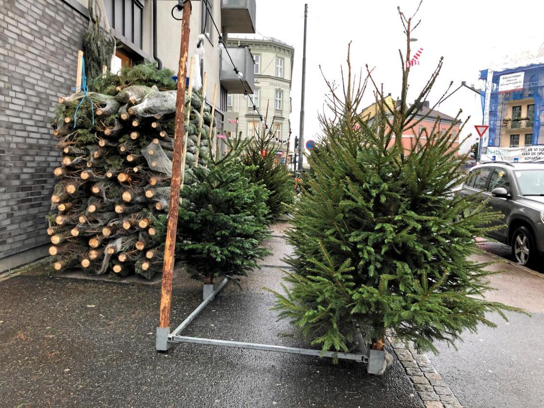 Rift om kundene: Uavhengige juletreprodusenter har de siste årene opplevd større konkurranse fra Coop. Foto: Lars Johan Wiker