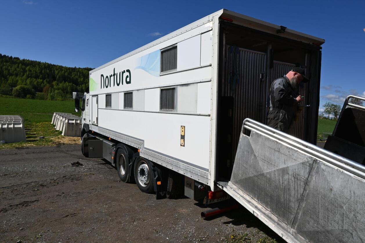 Norturas digitale livdyrportal skal blant annet gjøre det lettere å planlegge transporten. Foto: Arkivfoto.