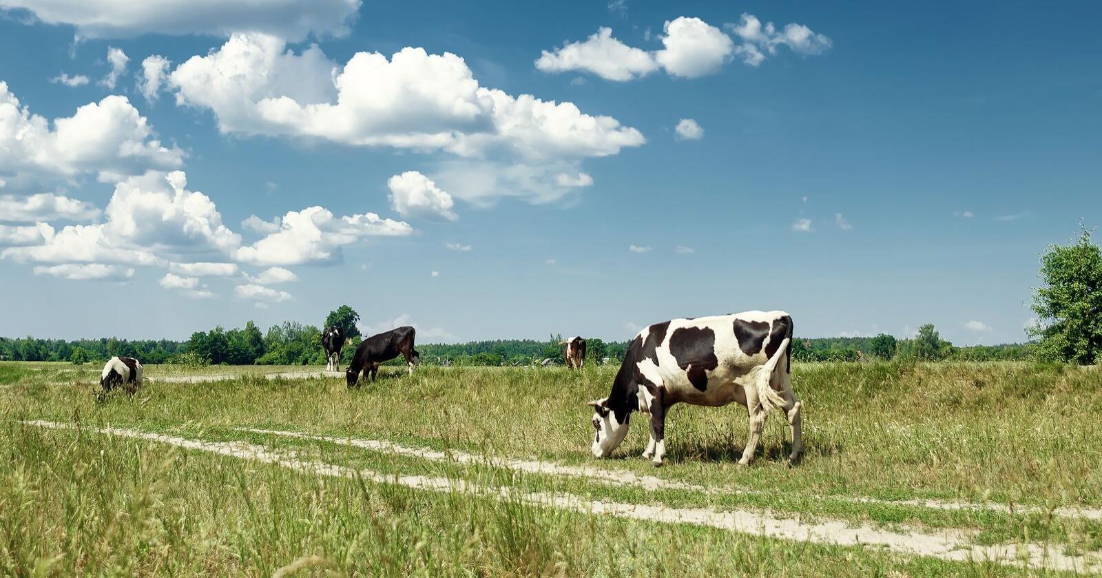 Dyrevernalliansen vil innføre et dyrevelferdstilskudd i landbruket. Foto: Alexander Marko/Mostphotos