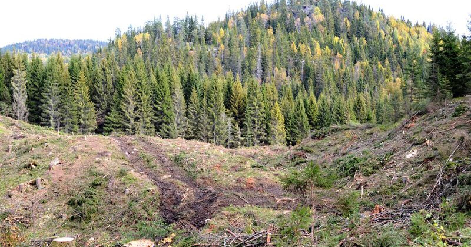 En ny rapport viser at andelen gammel skog er spesielt høy i fjellskogen og på lave boniteter. Arkivfoto: Bondebladet