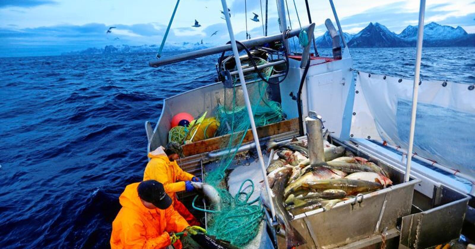 Utenfor Senja: Her fisker skipper Trond Dalgård (51) og Jan Gunnar Johansen skrei ved Gryllefjord. Begge er oppvokst på Senja og har havet som nærmeste nabo og arbeidsplass. Foto: Cornelius Poppe / NTB scanpix