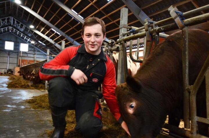 Birger Gikling Ingeborgvik (19) er oppvokst med okser. Han drømmer om et eget melkebruk. Foto: Liv Jorunn D. Sagmo