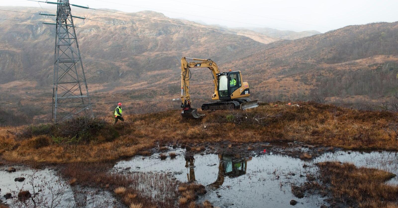 WWFs Naturundersøkelse viser at 77 prosent er ganske eller svært bekymret for tap av naturmangfold. Foto: Marit Hommedal / NTB.