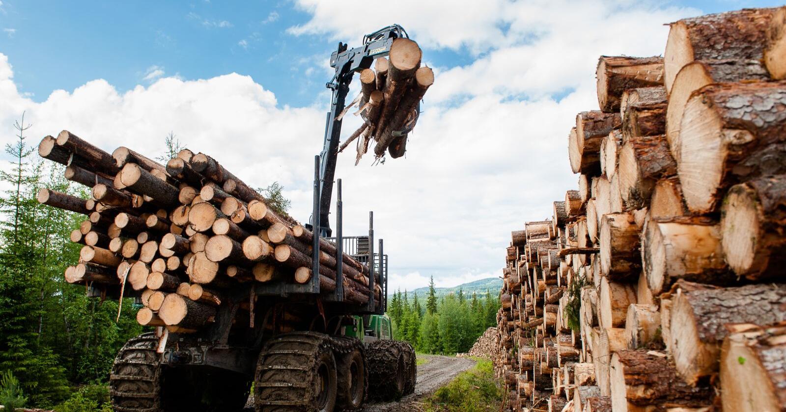 Skadelig: Skognæringen og politikere hevder at økt flatehogst, mer planting og enda mer bruk av dagens miljøskadelige skogbruksmetoder er bra for klimaet og for å nå Parisavtalens mål. Det er feil, skriver innsenderen av innlegget. Foto: Mostphotos