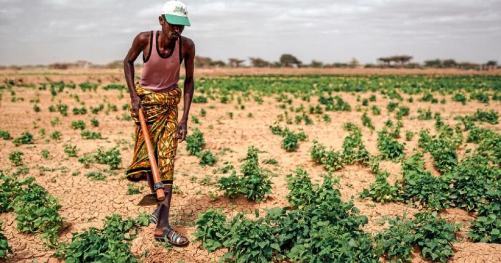 Den alvorlige tørken i Somalia i 2017 ga store utfordringer for småbøndene i landet. Klimatilpasning i landbruket må på dagsorden, skriver kronikkforfatterne. >Foto: Kristoffer Nyborg / Utviklingsfondet
