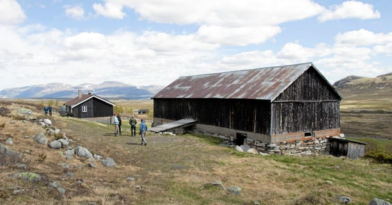 Tusenårig: Seterbygningene i Vesllie er blant de få med grunnmur i stein. Foto: Astrid Kvam Helset