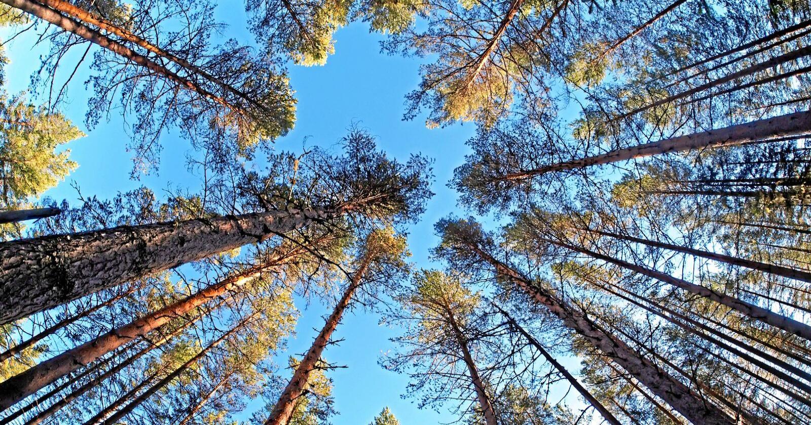 Stortinget har bevilget midler til kartlegging av naturtyper. Foto: Colourbox