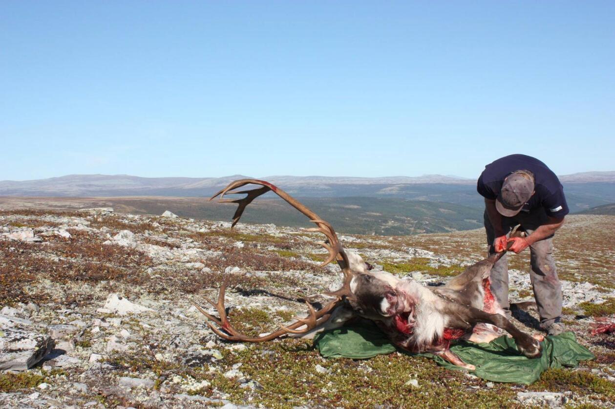 Foto: Sollia Fjellstyre
