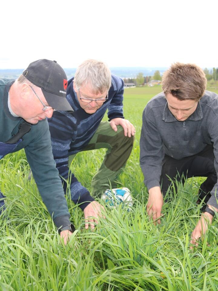 SLÅTT: Ifølge modellen Harald Volden (i midten) har laget, skal graset i enga på Lodviken gård vokse i 475 døgngrader før Mattis (t.v.) og Peder Dobloug starter førsteslåtten. Foto: Dag Idar Jøsang