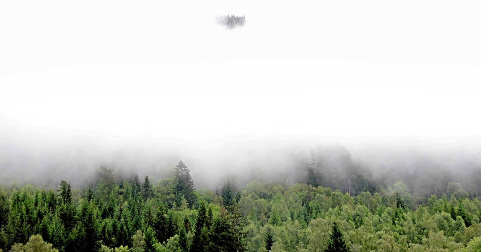 Klima: Et aktivt skogbruk må være løsningen. Foto: Mariann Tvete