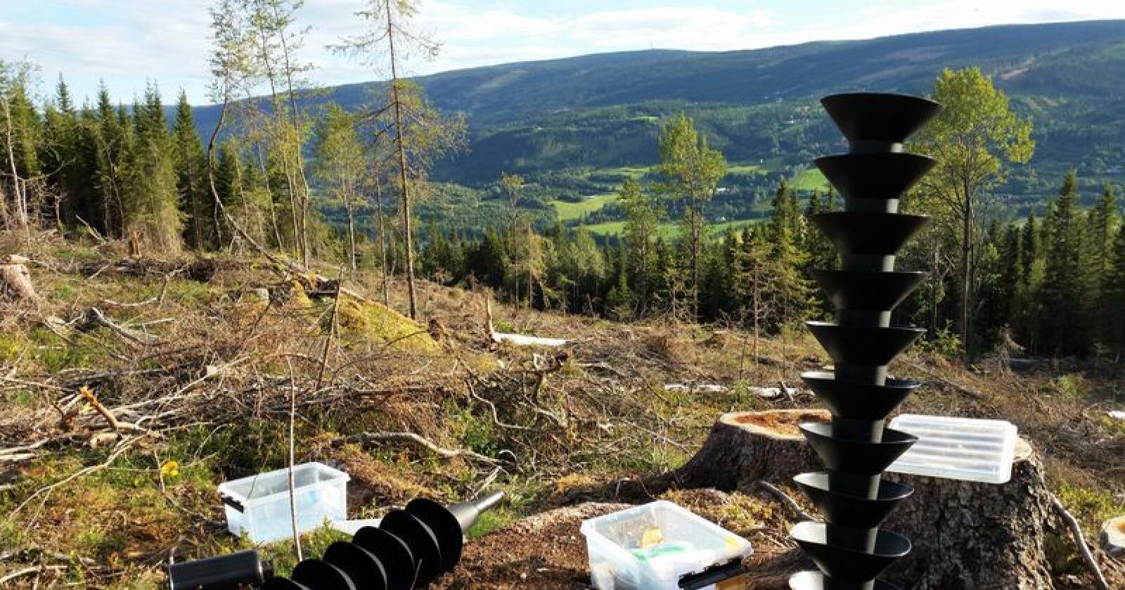 Mange lurer på om det i sommer vil skje en ny barkbillekrise i norske skoger. Her sees granbarkbille-registrering i Oppland. Foto: Fylkesmannen i Oppland