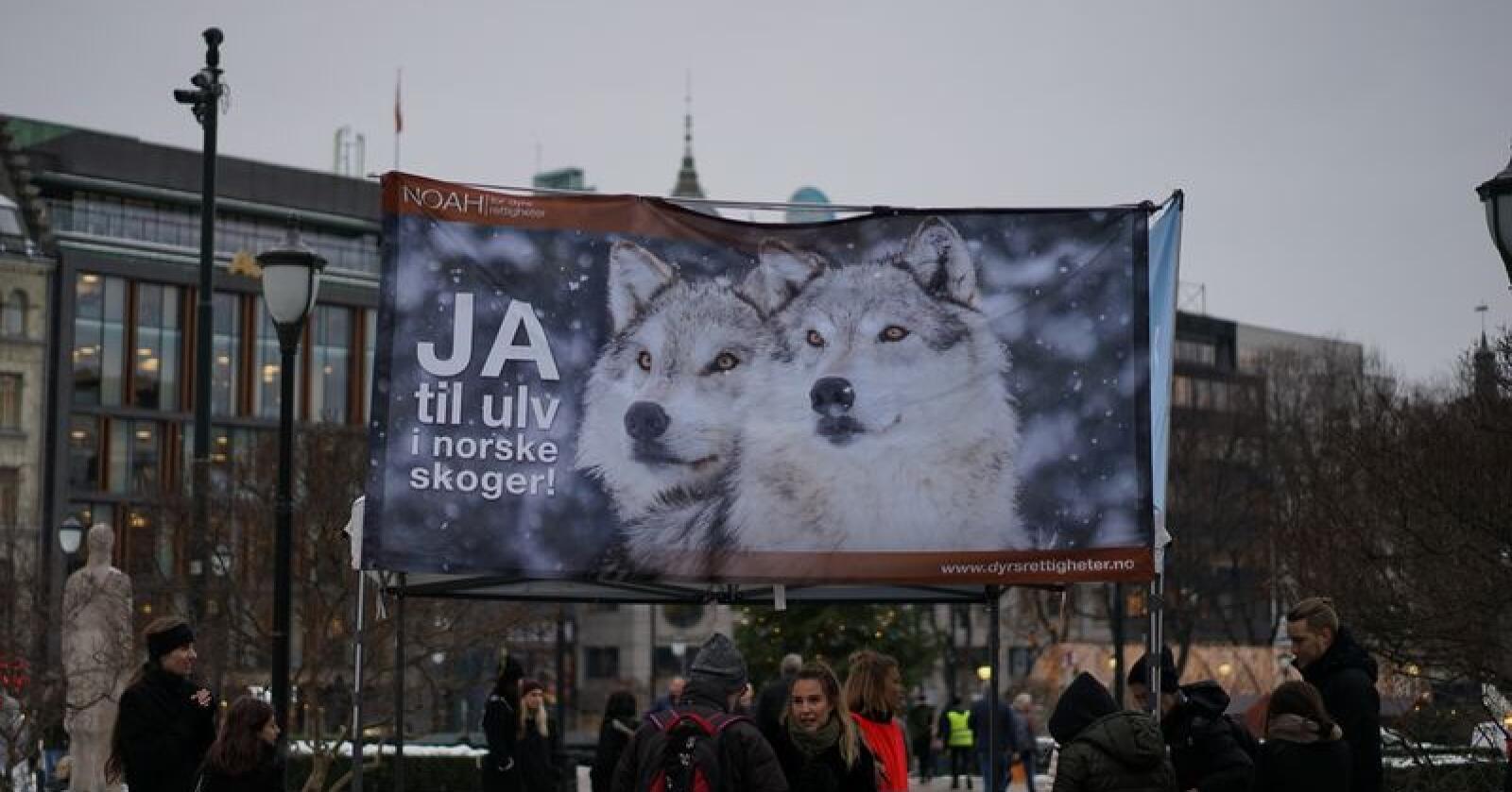 NOAH-markering for ulv på Eidsvoll plass utenfor Stortinget i midten av desemeber. Foto: Benjamin Hernes Vogl
