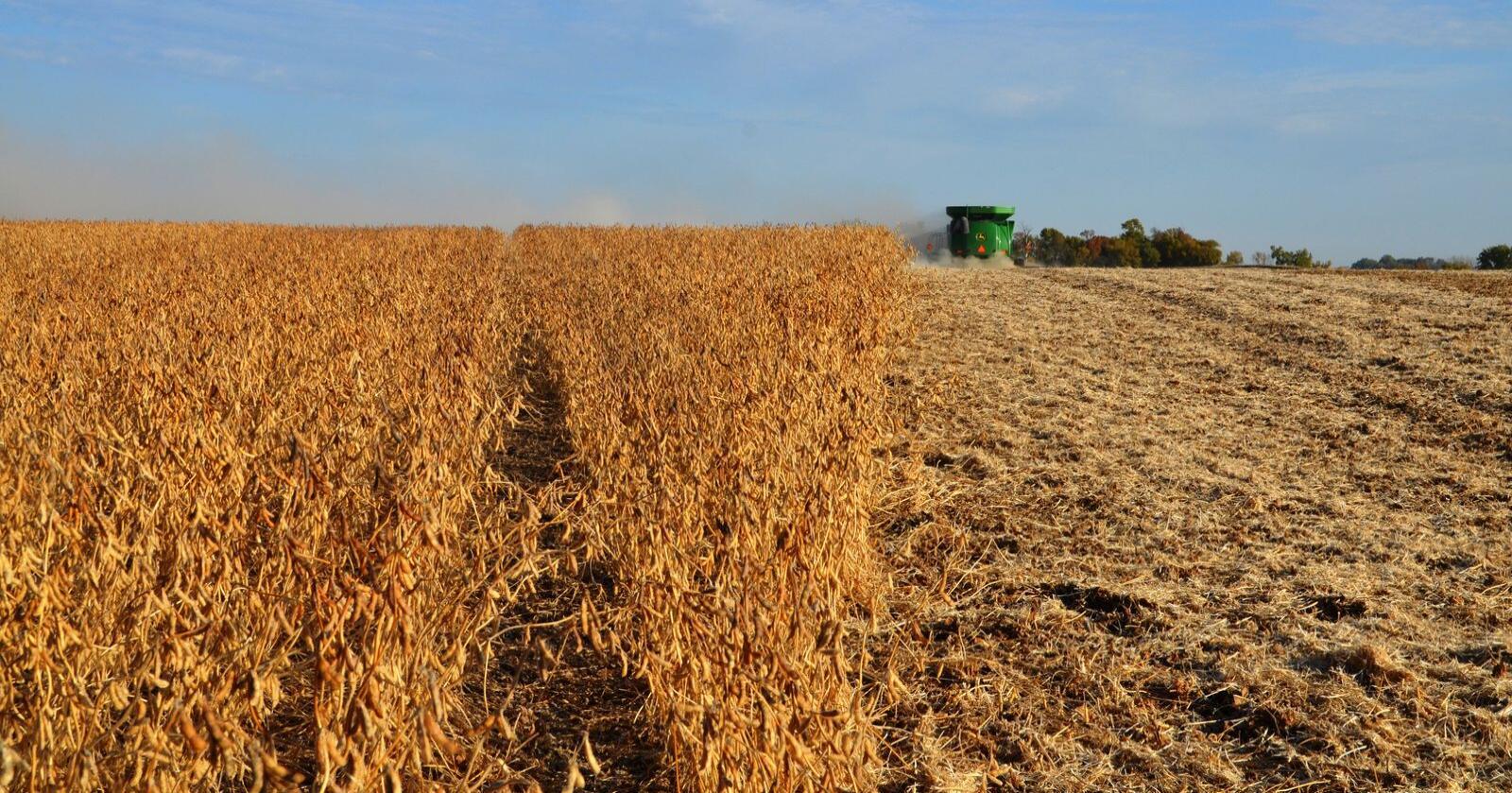Fordelingen av mat er ekstremt skjev, lik produksjonen av mat er ekstremt skjev. Spørsmålet vi burde stille oss etter denne fredsprisen, er hvordan vi kan gjøre WFP sin jobb overflødig, skriver Øystein Heggdal. (Arkivfoto fra Minnesota)