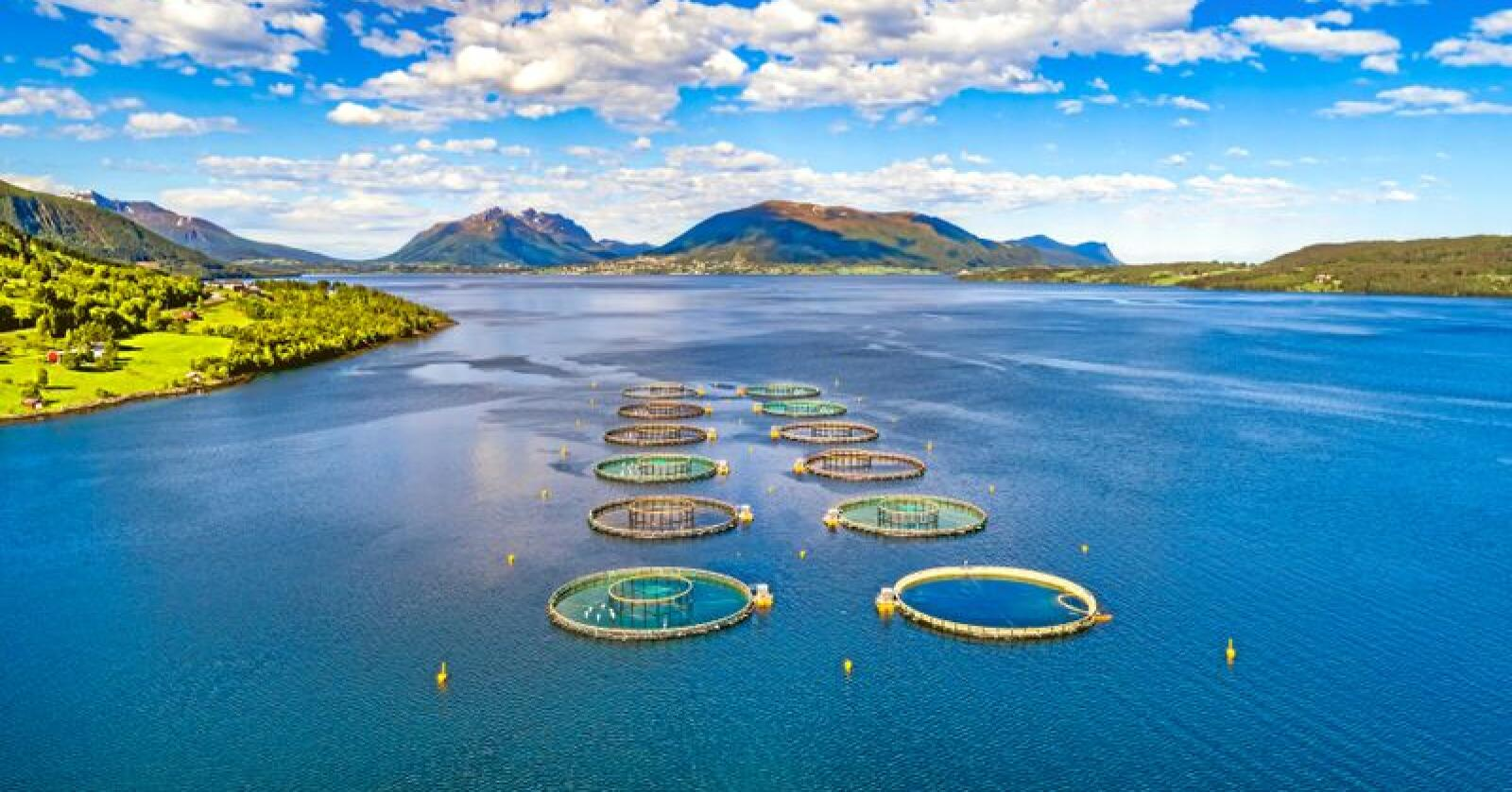Norsk sjømat møter i dag til dels svært vanskelige krav ved eksport,  spesielt til det brasilianske markedet. Andrey Armyagov / Mostphotos
