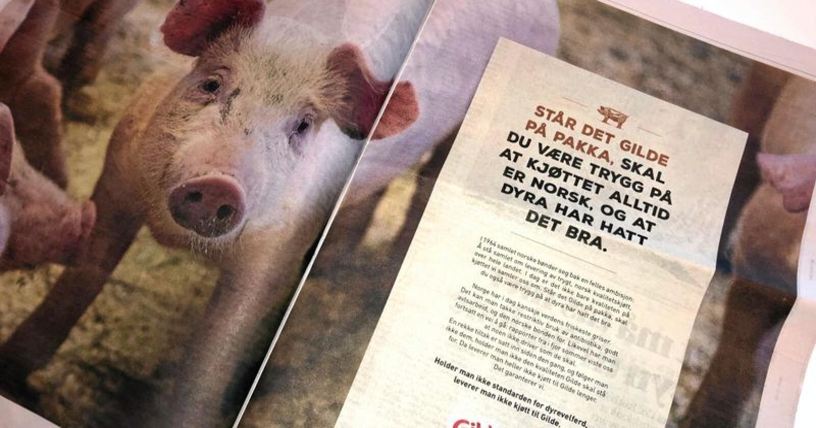 En dokumentar om svineprodusenter som ble sendt på NRK onsdag, har skapt reaksjoner. Torsdag slo Gilde tilbake i en annonse i flere norske aviser. Foto: Lars Bilit Hagen