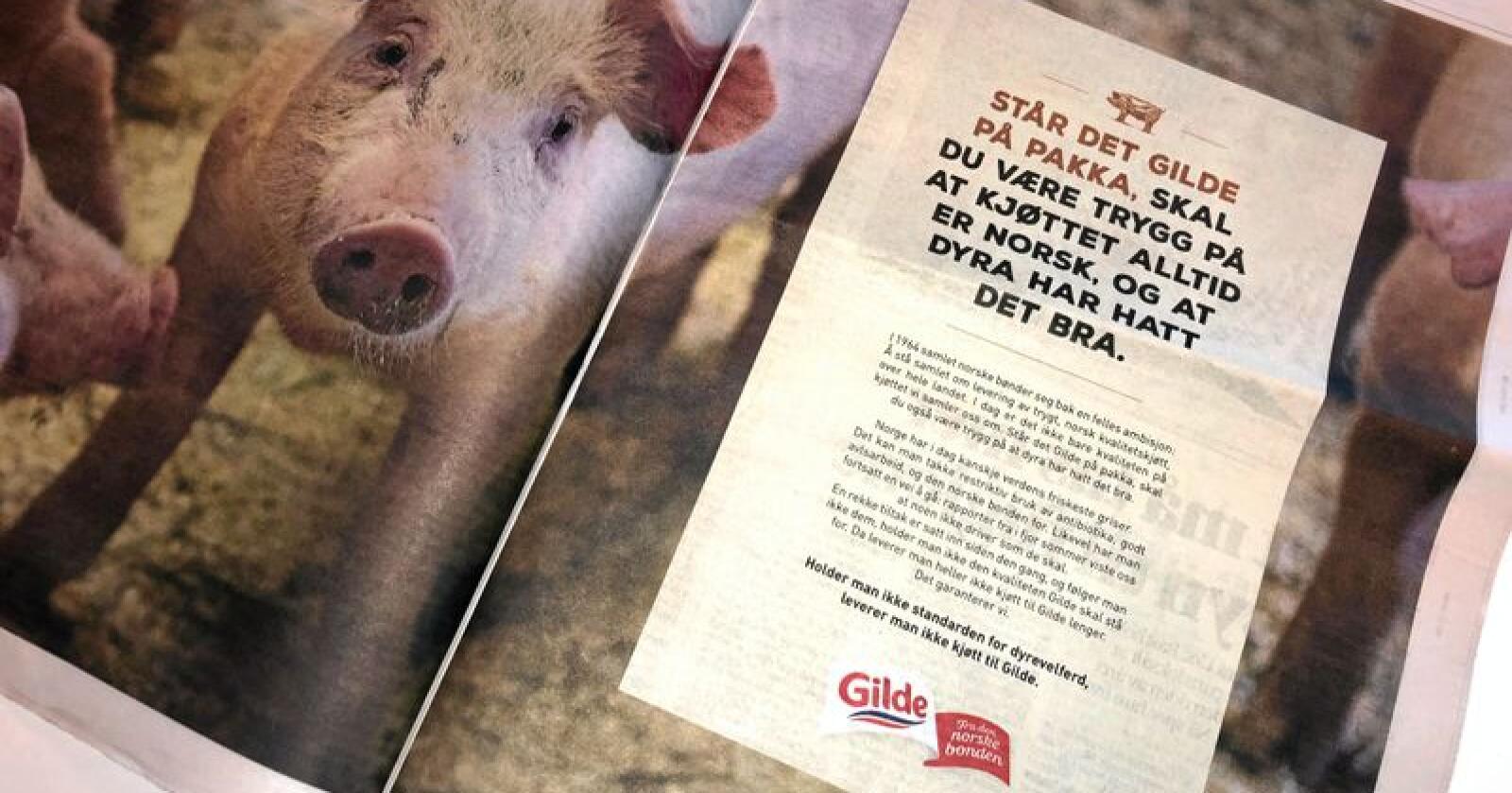 Gilde-annonse dagen etter NRK Brennpunkt-dokumentar om svinenæringa. Foto: Lars Billit Hagen