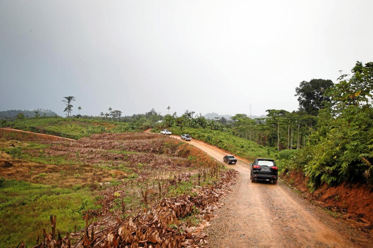 Statsminister Erna Solberg (H) besøkte avskogede områder i regnskogen på Sumatra i Indonesia i 2015. Ødeleggelse av regnskog er en trussel mot svært mange forskjellige arter. Foto: Heiko Junge / NTB scanpix