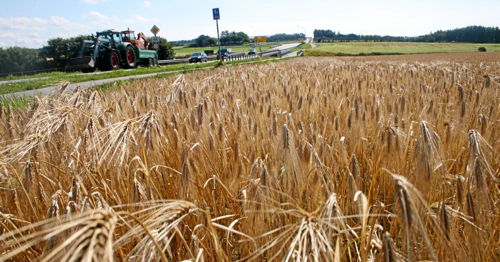 Berekraftig: Jordvern, optimal bruk av matjorda og gode avlingar blir av Nibio trekt fram som eit berekraftig svar både på klimautfordringane og risikoen for global svikt i matproduksjonen. Foto: Bjarne Bekkeheien Aase