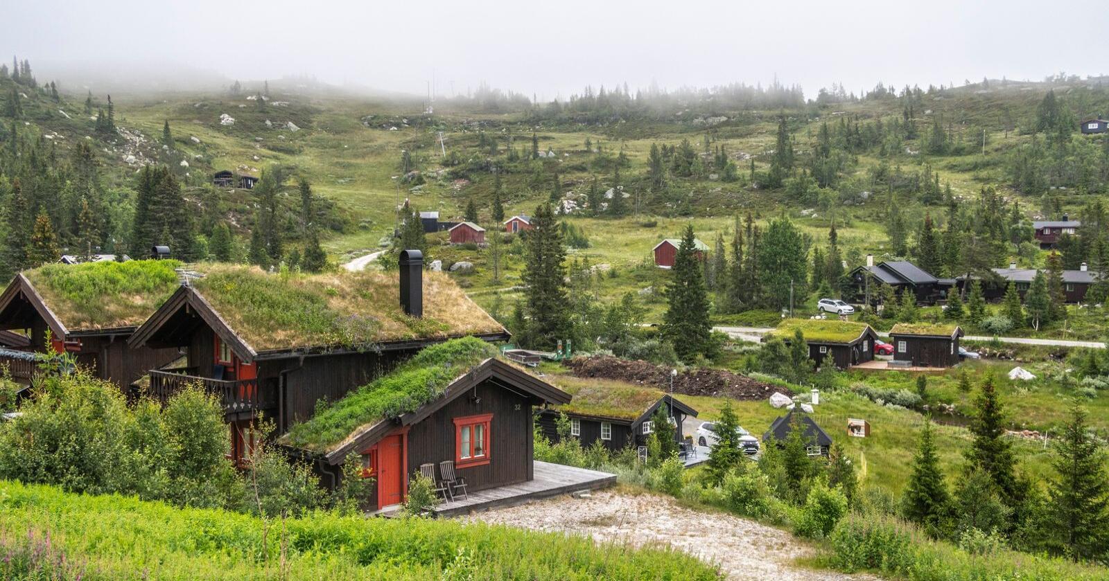 Flere nordmenn enn vanlig tilbrakte sommerferien på hytta. Det har ført til langt færre hytteinnbrudd. Foto: Halvard Alvik/NTB scanpix