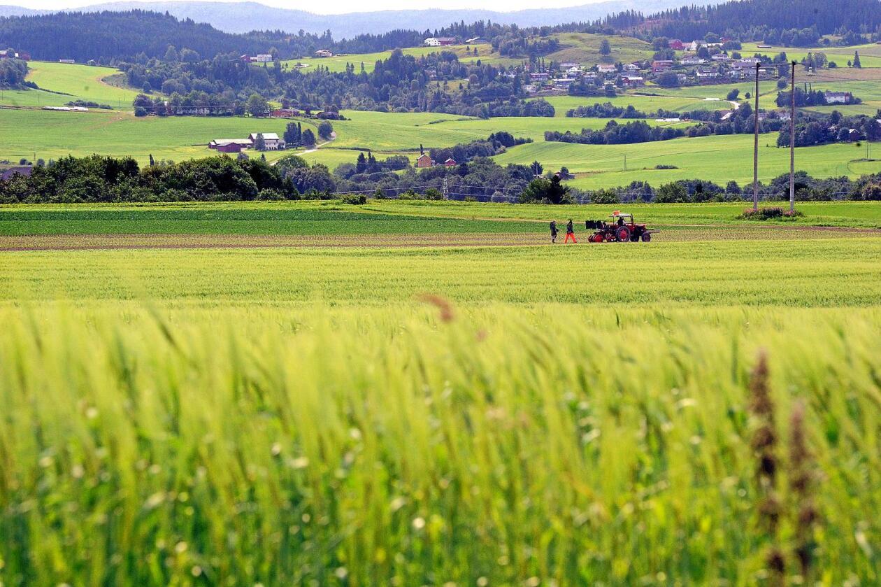 Hever du blikket og ser matsikkerheten i verden i sammenheng, blir det raskt tydelig at et kornlager i Norge får konsekvenser langt utenfor landegrensene, mener den drevne landbruksdiplomaten Bjørn Eidem. Foto: