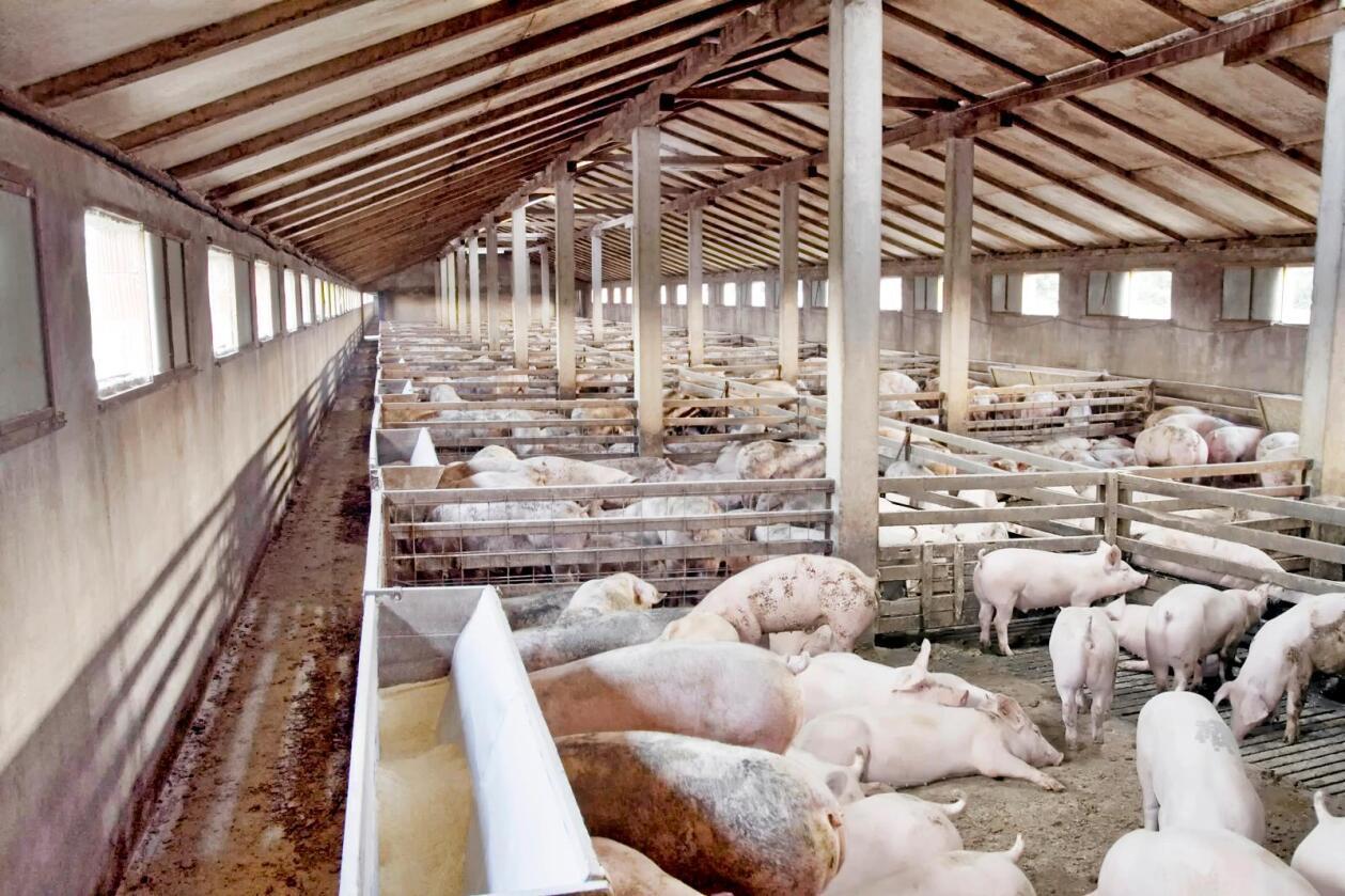Vi har ikke rett til å redusere noen dyr til handelsvarer og landbruksprodukter, skriver Andreas F. Askautrud. Foto: Colourbox