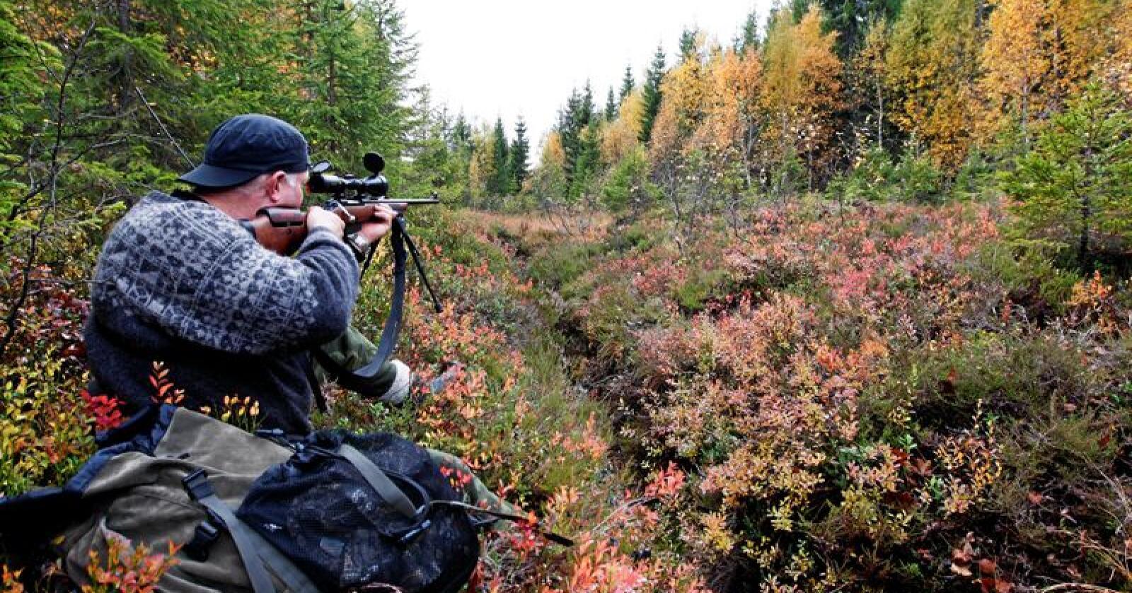 Jakt, fiske og skogsdrift bidrar til utrydding av langt flere dyrearter enn global oppvarming, viser nye studier. Illustrasjonsfoto: Gorm Kallestad / NTB scanpix