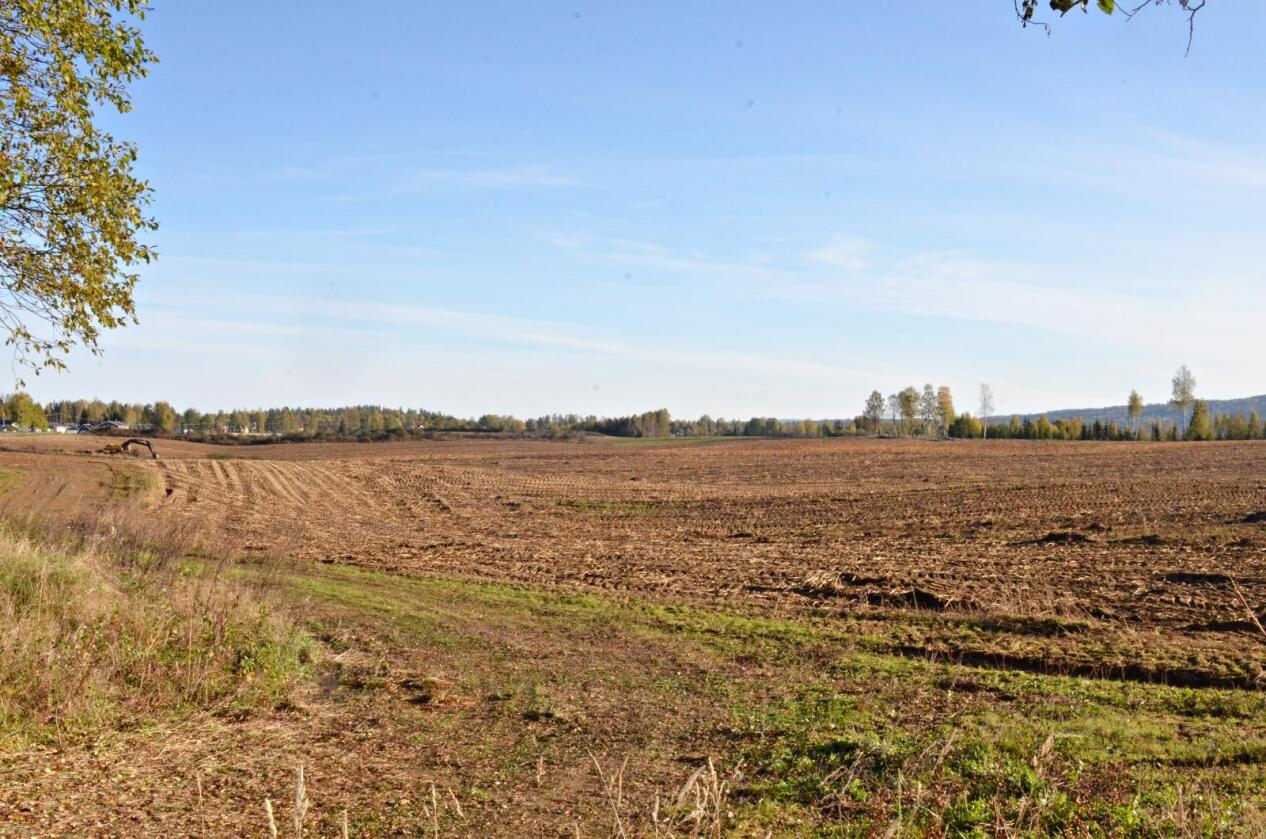 Attraktivt: Dette jordet i Ullensaker er på 455 mål, og mangler ikke potensielle kjøpere. Det utgjør nesten all den dyrkede jorda på gården Risebro Vestre. Foto: Stian Eide