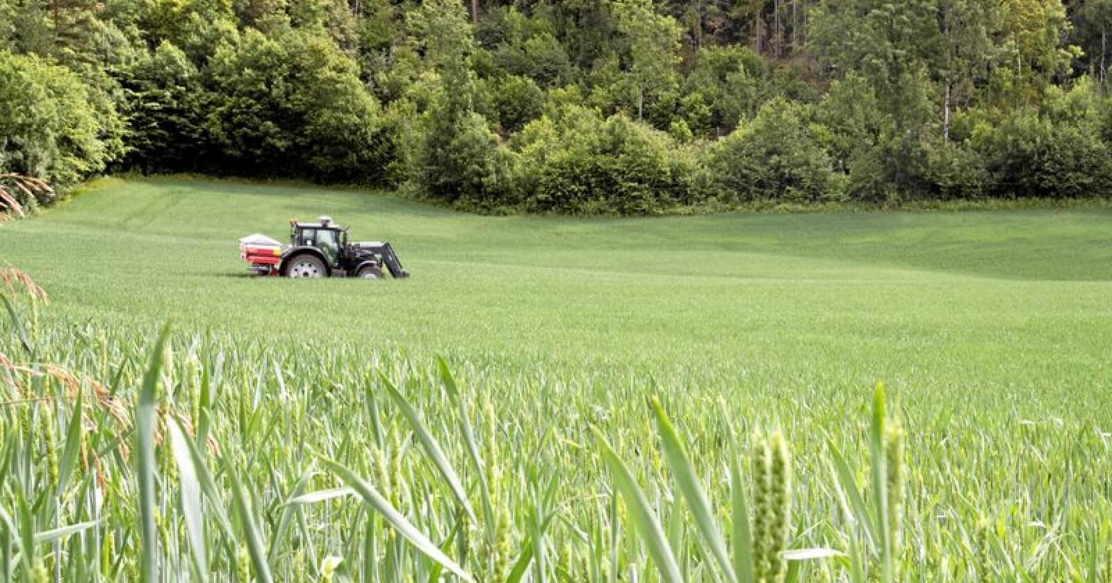 Gjødsel: Fosfor er et mineral verden snart går tom for. Men det finnes nye løsninger på gjødselbehovet, skriver kronikkforfatterne. Foto: Terje Bendiksby / NTB scanpix