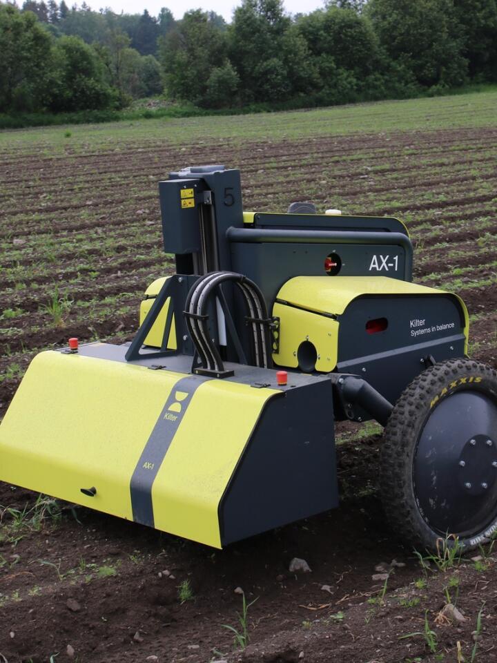 Gjør jobben: Den selvgående roboten punktsprøyter ugrasplantene i persilleåkeren hos Hasle med en kapasitet på 40–50 dekar i døgnet.