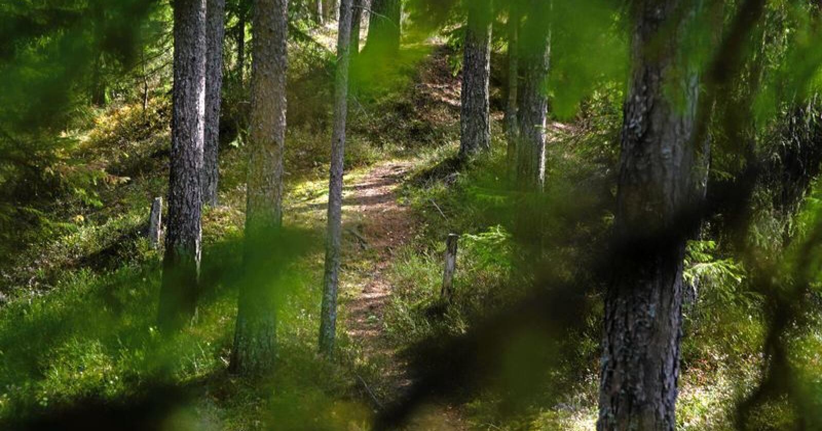 Løsning: Stien minner oss om naturlige sammenhenger, skriver kronikøren. Foto: Bjørn Ivar Voll