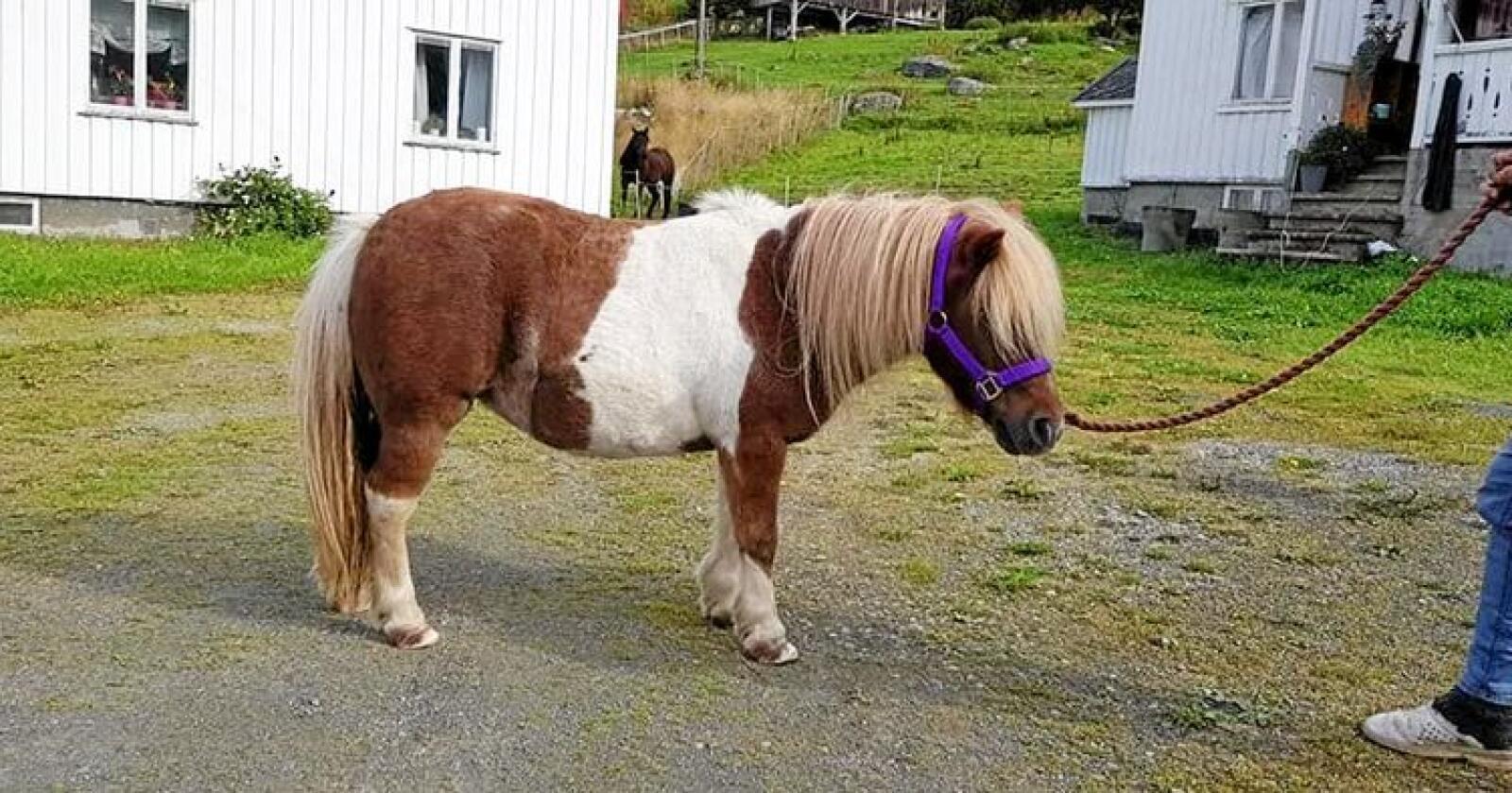 Tina Bjørnewall er nå på vei til Averøy for å hente tilbake ponnien sin. Foto: Tina Bjørnewall