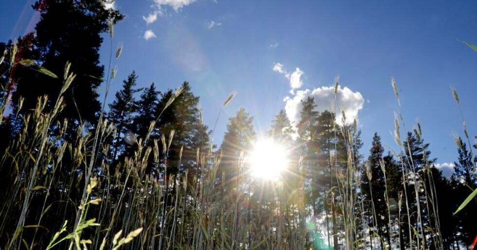 Ektrem varme og tørke førte til alvorlige avlingsskader i 2018. Foto: Mariann Tvete