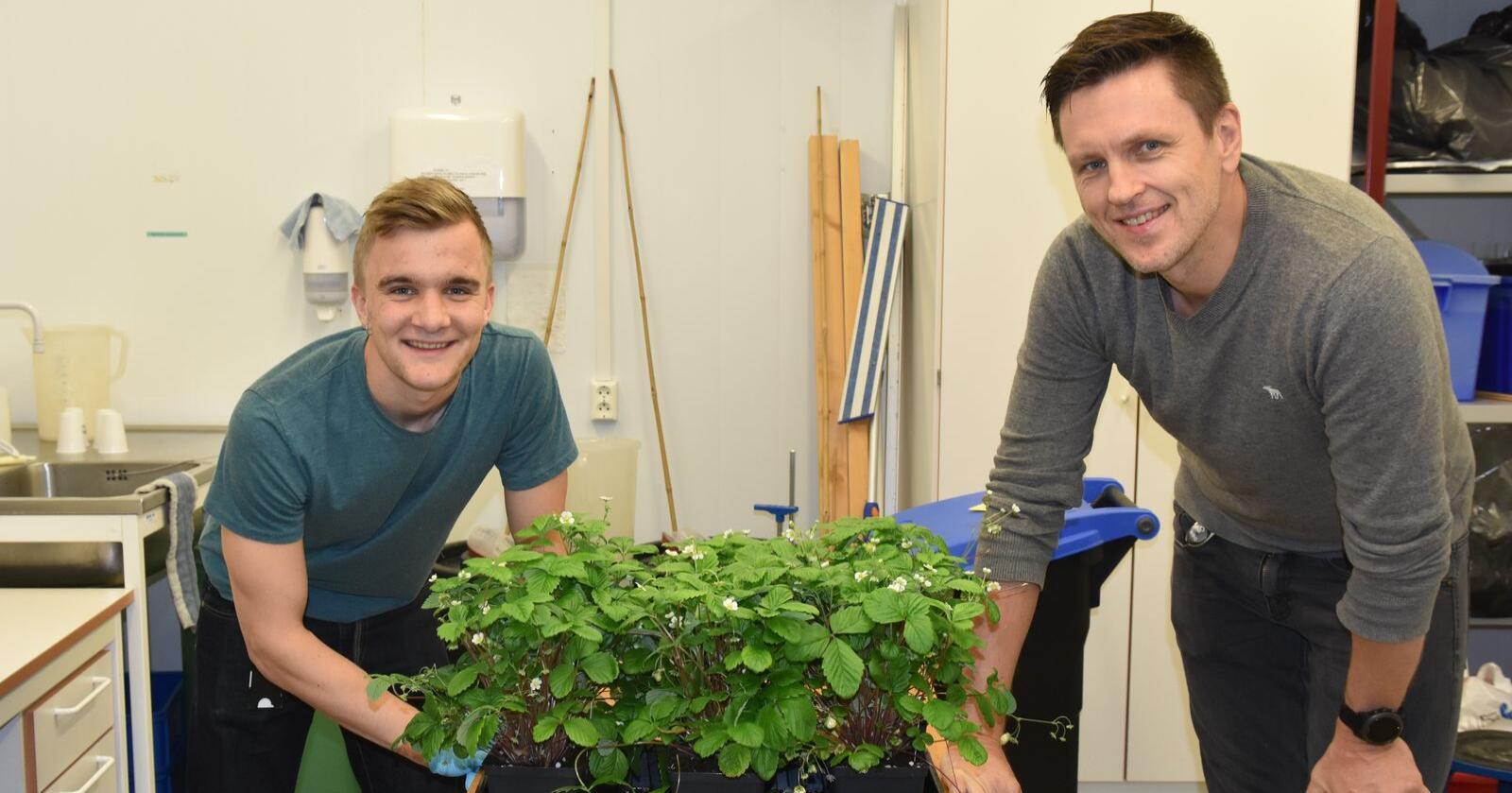 Crispr: Nibio-forsker Tage Thorstensen og masterstudent ved NMBU, Oskar Schnedler Bjorå, forteller at de har 50–60 planter som vokser i godkjente vekstrom for GMO. Foto: Siri Elise Dybdal