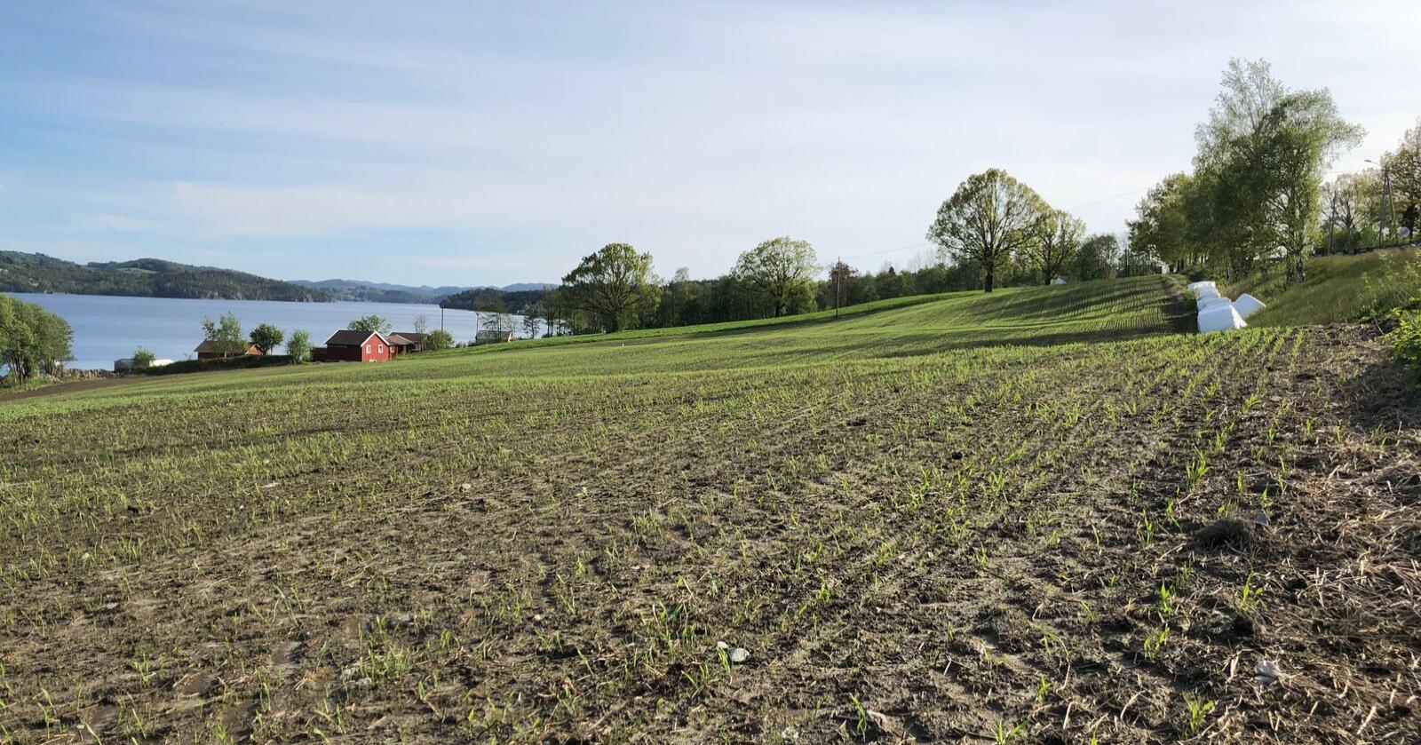 40 000: Spørreskjemaet går ut til 40 000 jordbruksbedrifter. Bildet er fra Skjold i Vindafjord kommune. Foto: Karl Erik Berge
