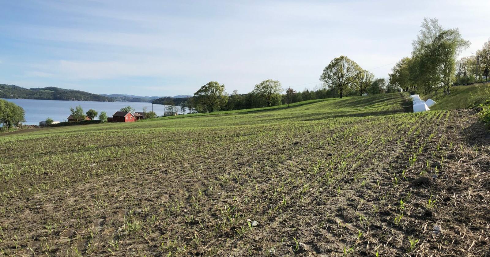 – Det er viktig å tilby gode veiledere, som blant annet kan bidra til å redusere nedbyggingen av matjord, påpeker landbruks- og matminister Olaug Bollestad (KrF). Her sees kulturlandskap i Vindafjord kommune. Foto: Karl Erik Berge