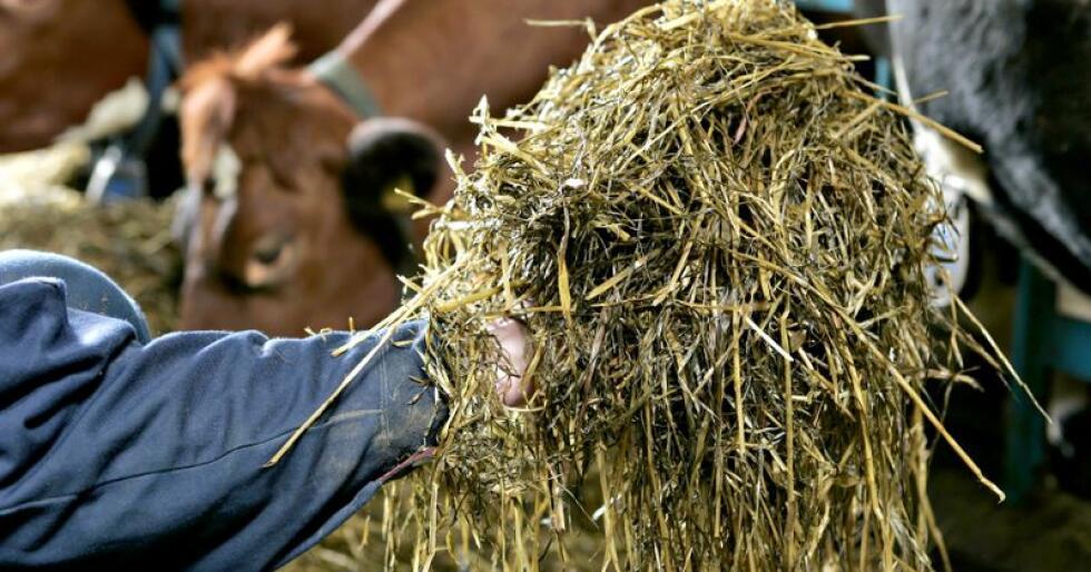 Tine er for raske med å endre rådene om bruk av ensileringsmidler til bønder som sliter med sporeproblemer, mener Åshild T. Randbry.. Foto: Marcus Pasveer