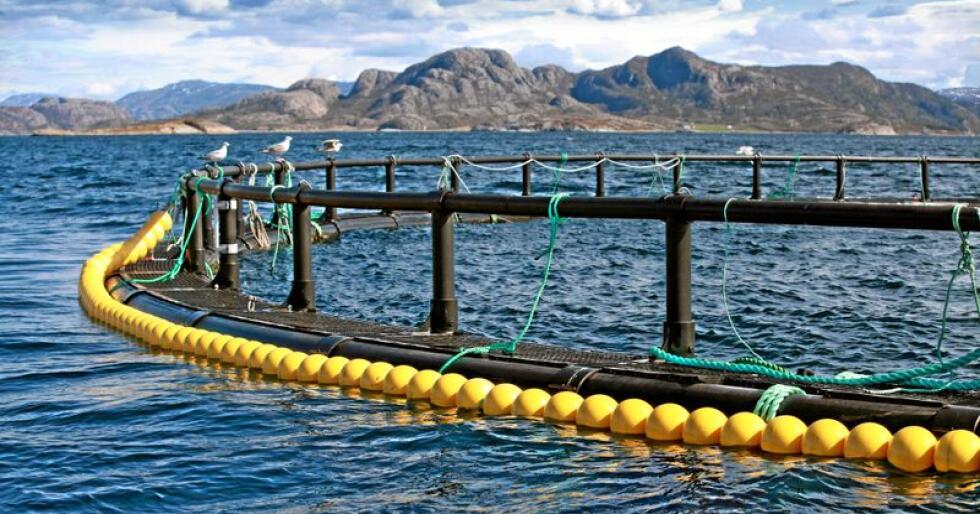 Oppdrett: Det er mye oppmerksomhet rettet mot siste del av produksjonen, der laksen er i sjøen. Men hva med starten på oppdrettslaksens liv? Foto: Eugene Sergeev / Mostphotos