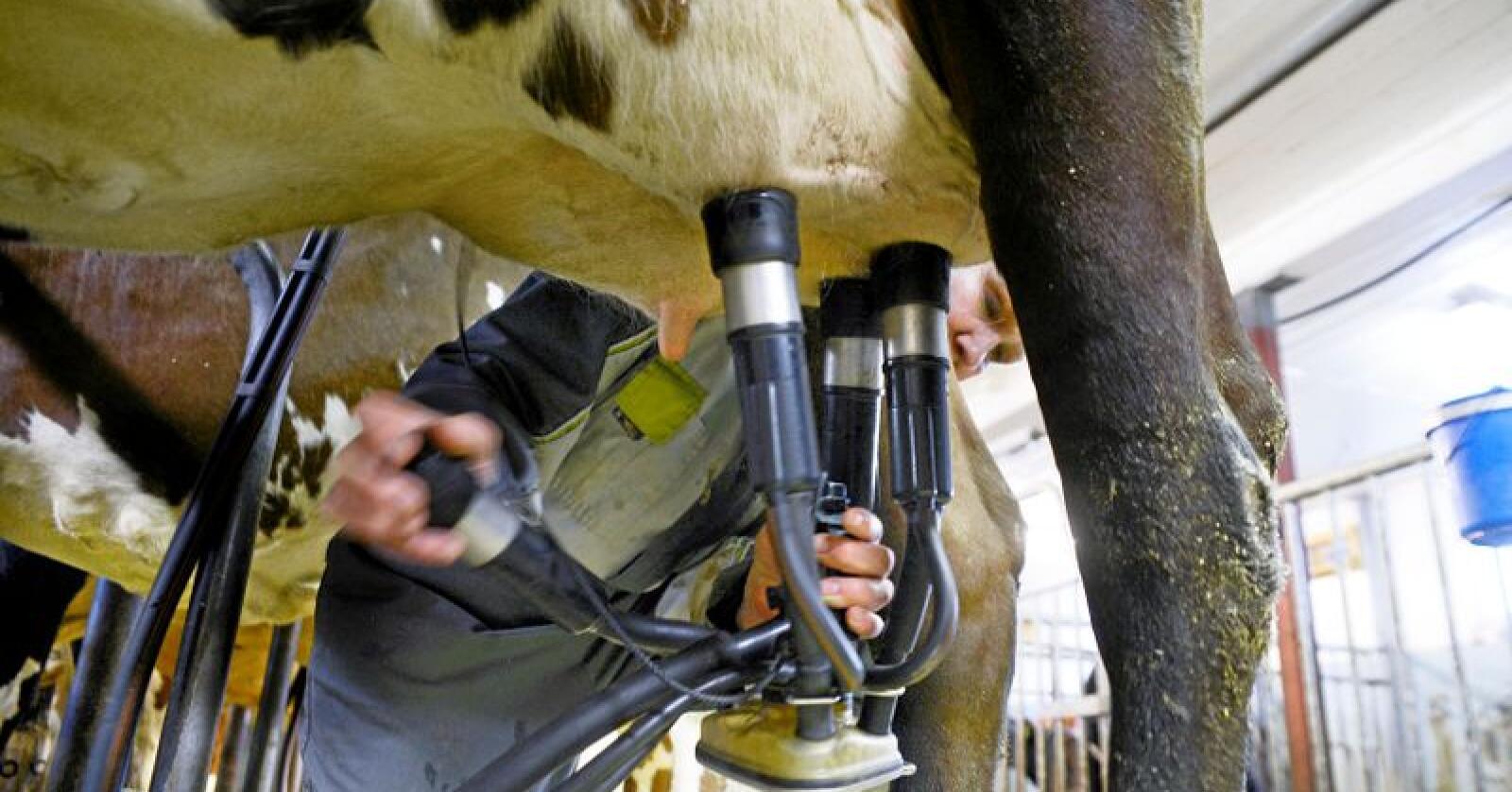 Vi har snart rundt 7600 bønder som driver med mjølkeproduksjon, skriver Kjersti Hoff. Foto: Mariann Tvete