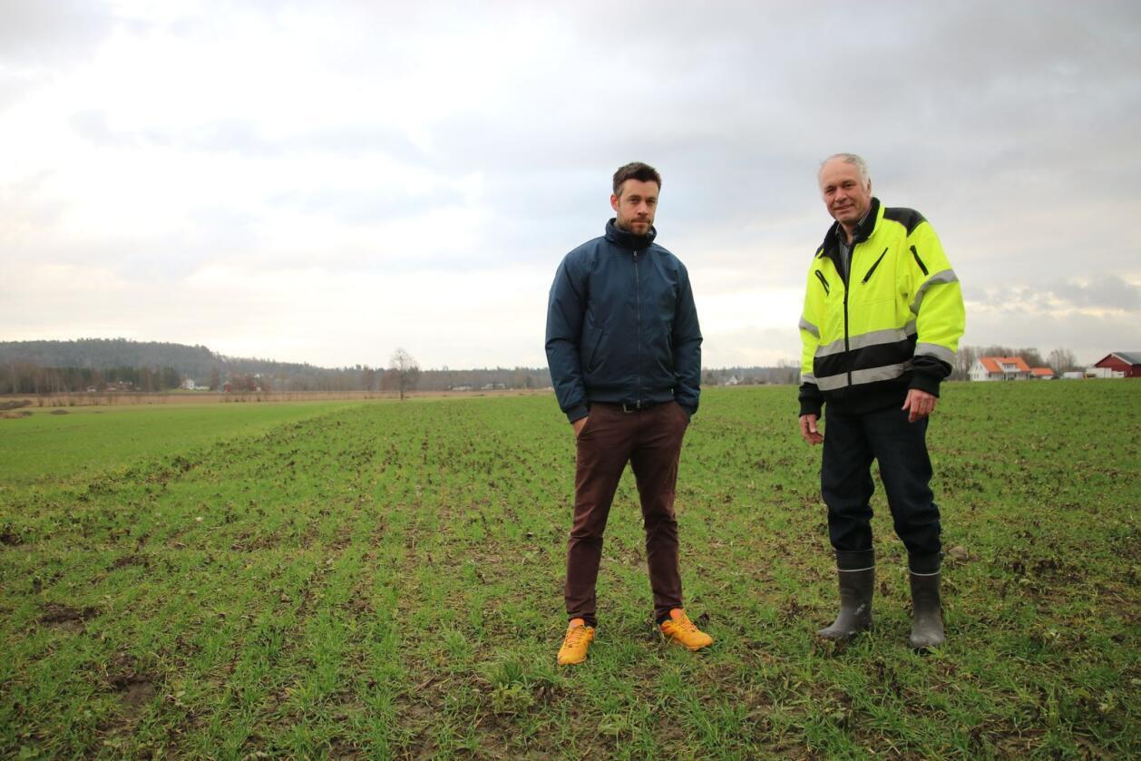 –  I år har vi 200 daa med fangvekster. Det hadde vært fint å få litt kred for dette i klimakalkulatoren, sier Svein Ivar (t.v.) og Trygve Ånestad. Det er sådd høsthvete på jordet der de står. Foto: Knut Houge