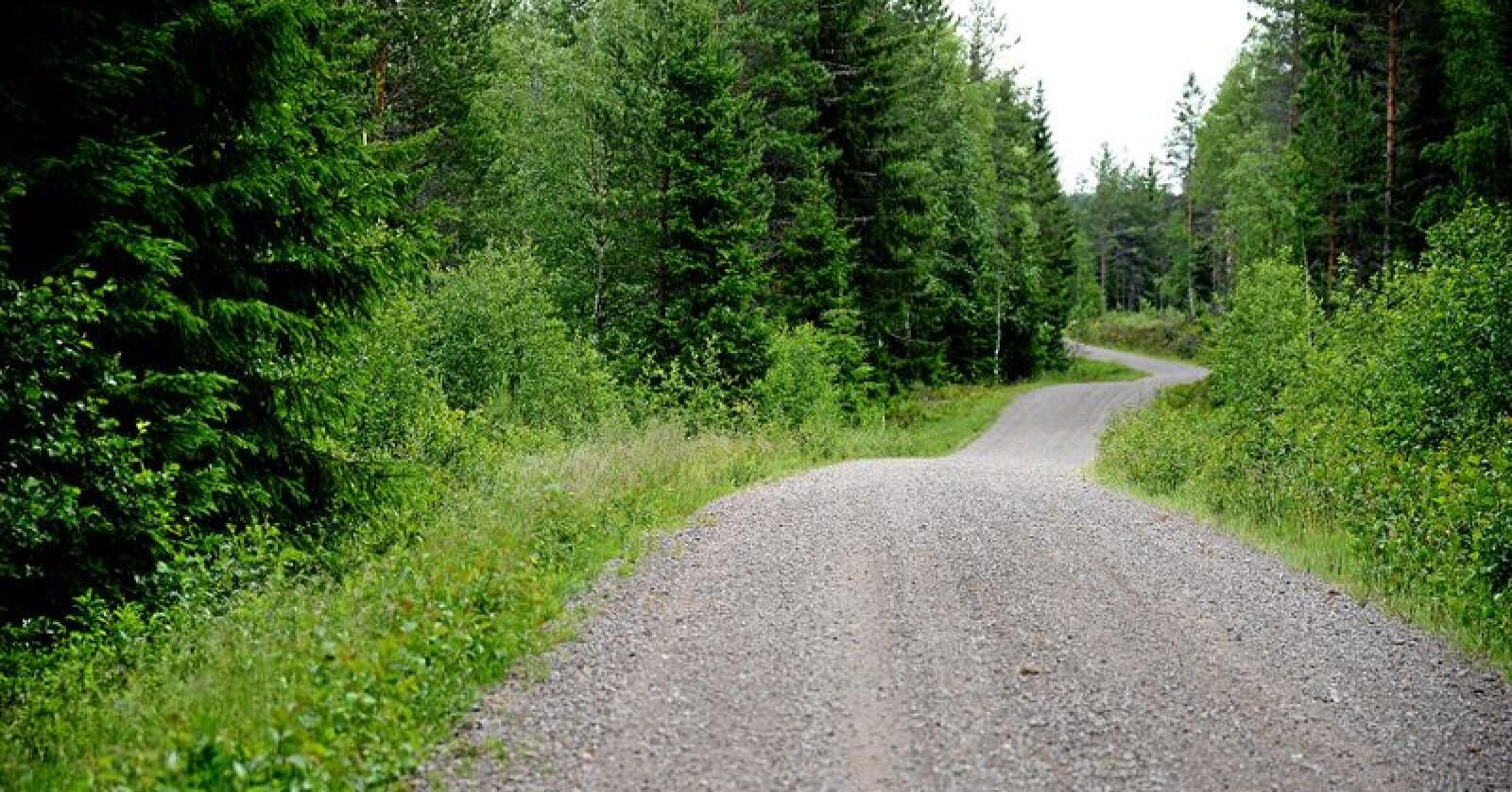 Skogvernet må legges til de stedene der det ikke er aktivt skogbruk. Foto: Siri Juell Rasmussen