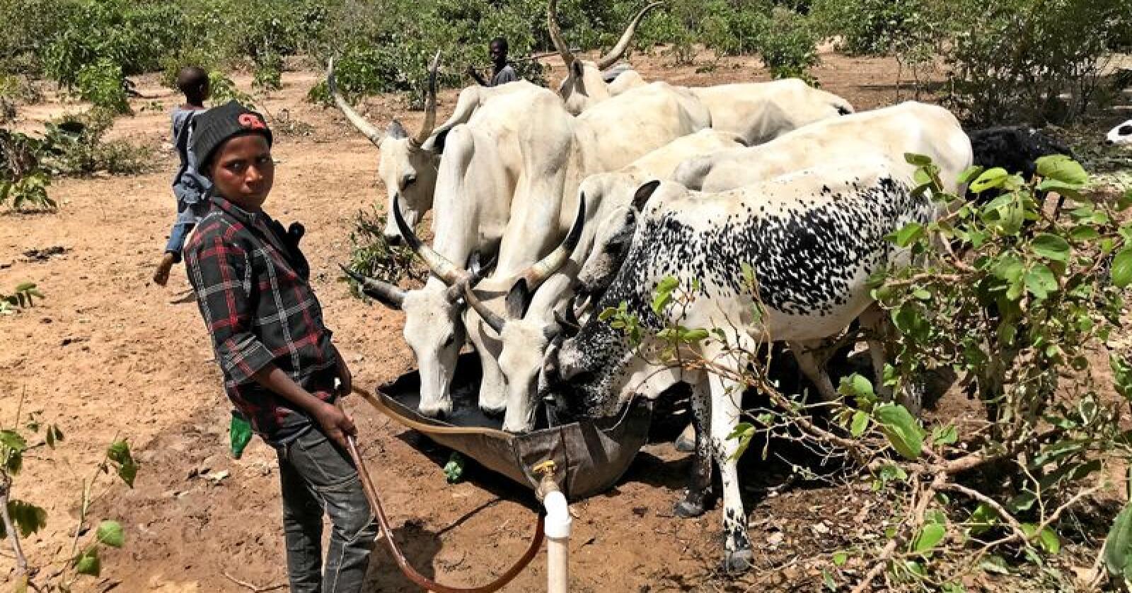 Ifølge Arla skal regjering gi 1000 bønder egen jord, samt utbedre veier, strømnett og vanntilgang. Foto: Arla Foods