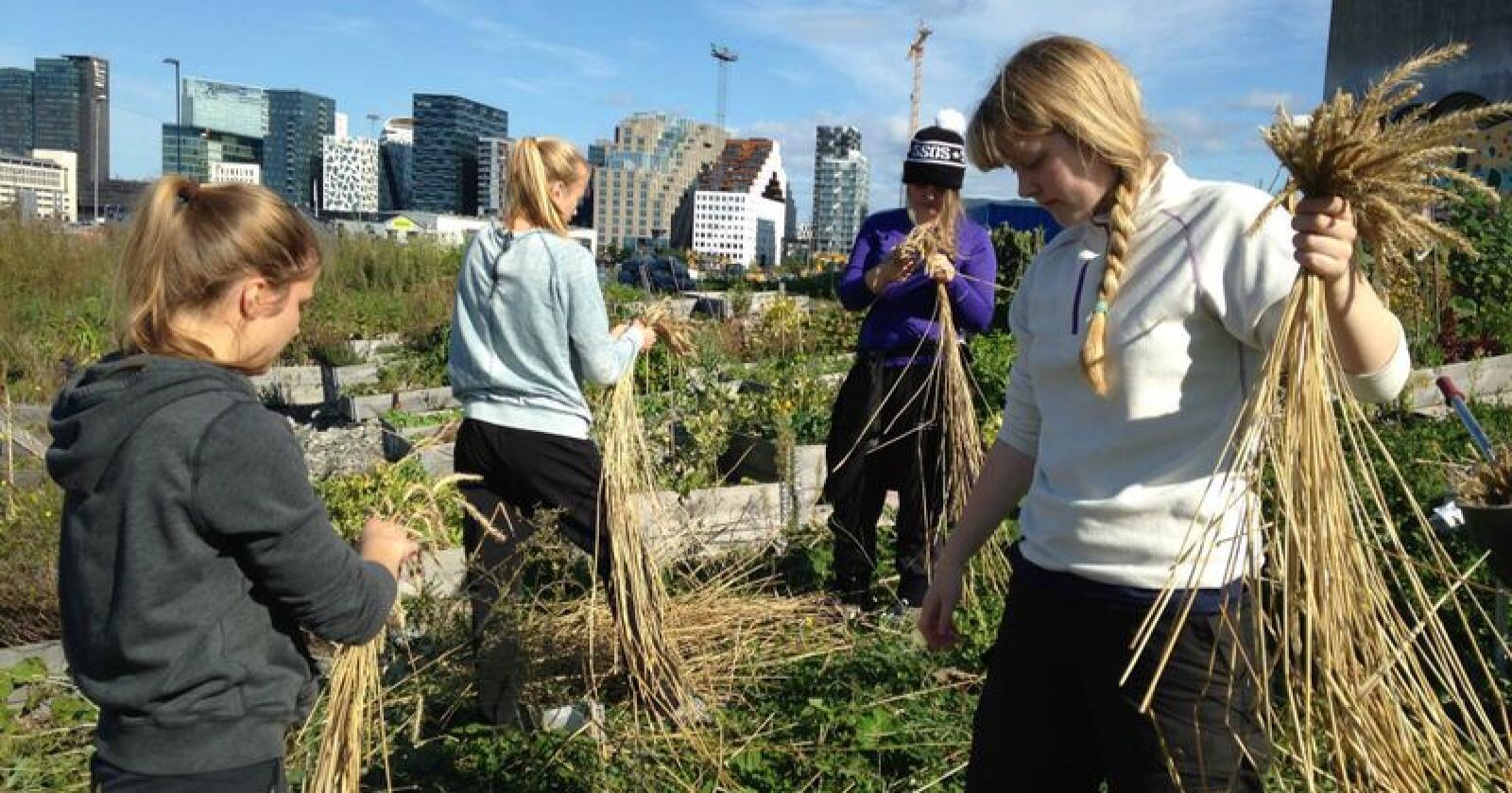 Natur vgs. i Oslo er blant mange skoler som vil bli hardt rammet av nok et kutt i satsen til naturbruksutdanningene. Opplæringen ved skolen er praktisk orientert, og mye av utdanningen skjer utendørs. Her er elever ved skolen i sving på Losæter i Oslo sentrum. (Foto: Natur vgs.)