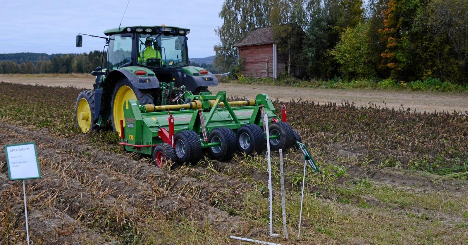Blant annet på markdag med Norsk Landbruksrådgiving og Findus i Solør, viste forsøkene med Spotlight Plus at preparatet fungerte best i kombinasjon med risknusing.
