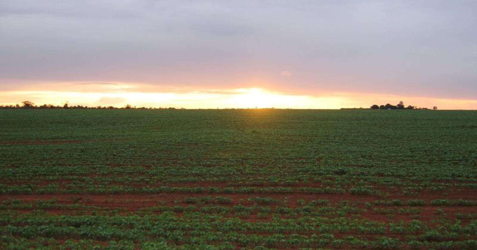 Vinn fram: Produkt frå den sør-amerikanske cerradoen har nyss vunne meir innpass i Europas handlediskar. Foto: Jan Husby
