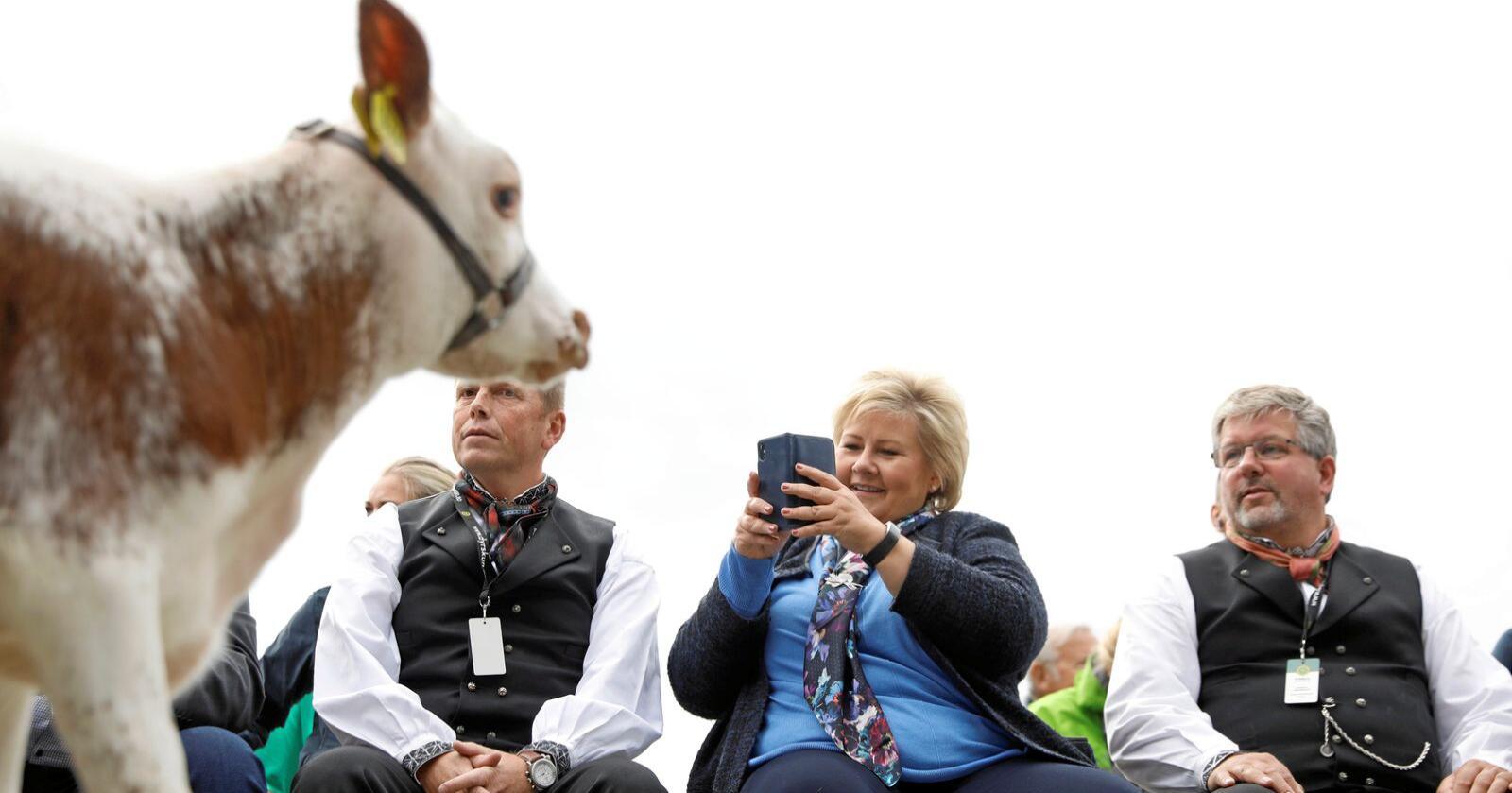 Kultur?: Statsminister Erna Solberg (H) deltok i 2018 på Dyrsku'n i Seljord. Men er landbruks- og matmesser kultur eller næring? Begge delar eller ingen av delane? Foto: Tore Meek / NTB scanpix