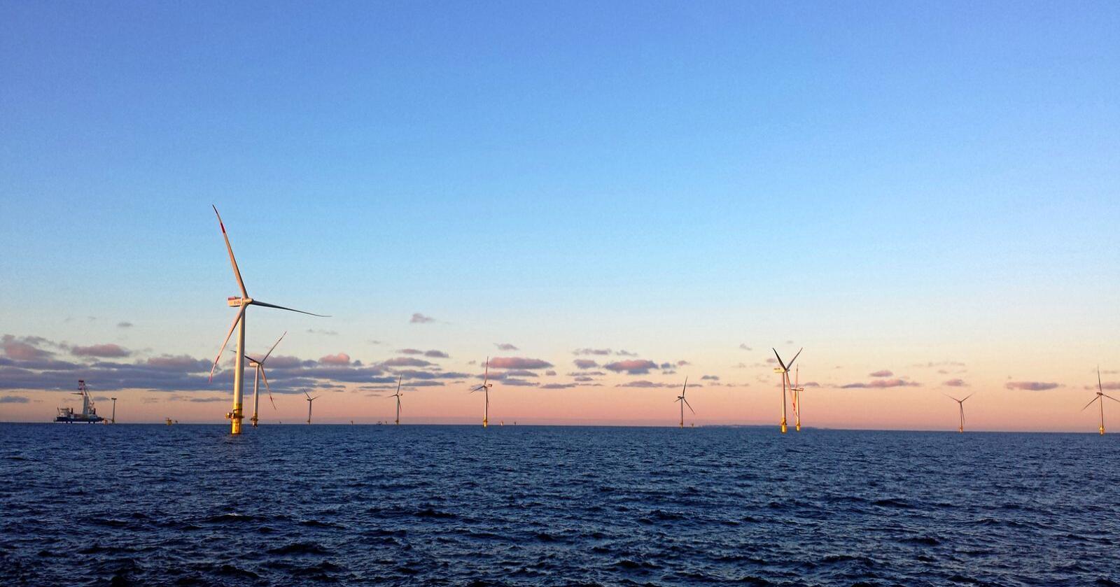Fisk nedi kavet: Bankene utenfor norskekysten har biomangfold og næring allerede, påpeker innsenderen. Foto: Mostphotos