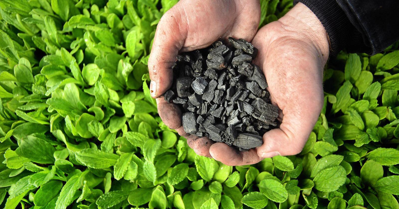 Biokull består av over 90 prosent karbon, og lagrer dermed karbon og gir det en positiv klimaeffekt. Foto: Siri Juell Rasmussen