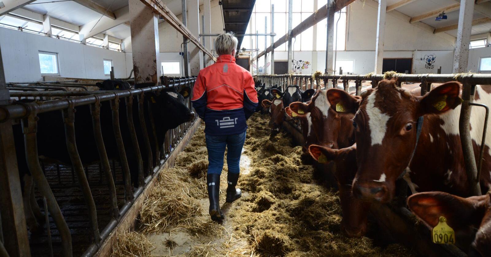 –  Først og fremst er dette en utrolig god nyhet for oss melkeprodusenter, slår styreleder i Tine, Marit Haugen fast.