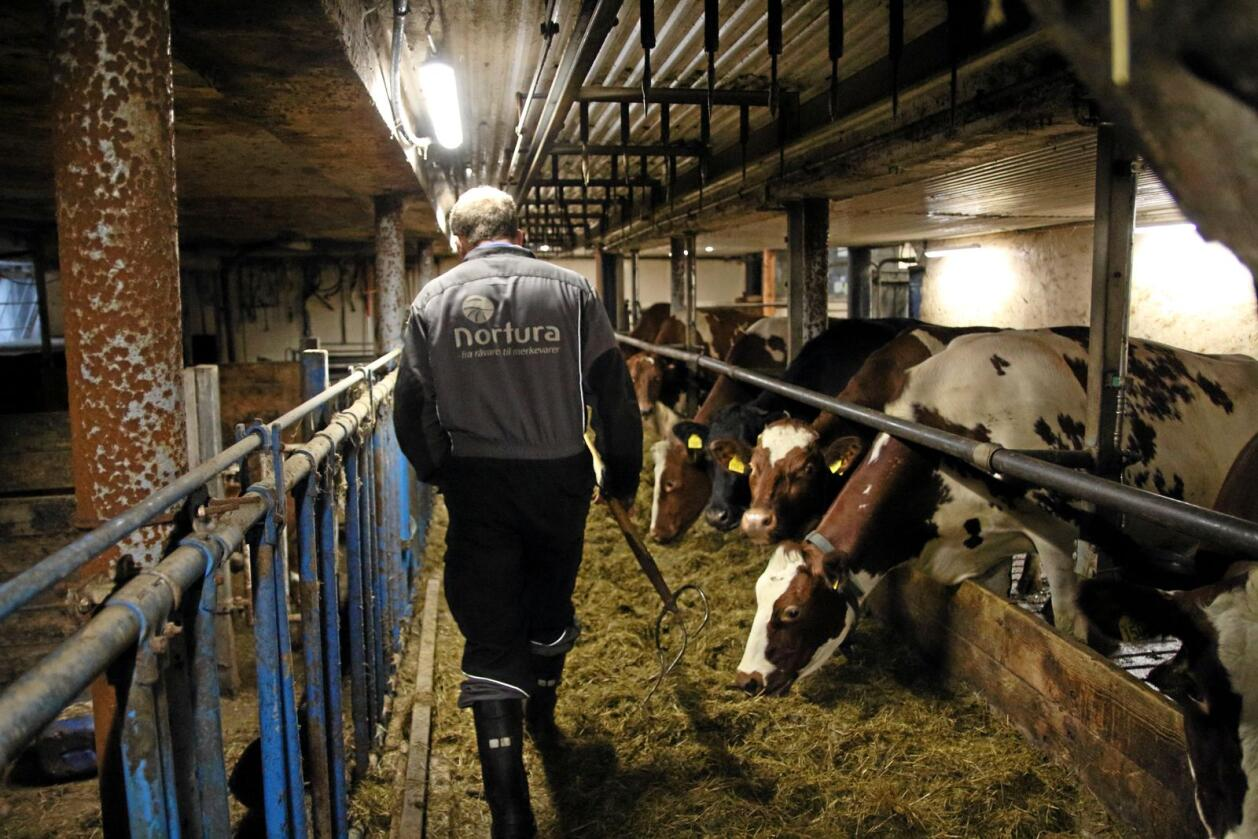 Dyrevernsnemdene skal ikke lenger utføre inspeksjoner eller fatte egne vedtak for Mattilsynet. Illustrasjonsfoto.